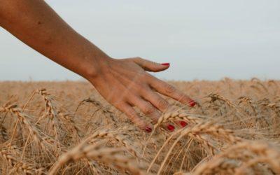 Mijn oogst na deze warme zomer